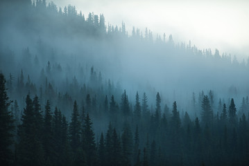 Misty Forest trees in a beautiful morning in Canada