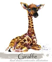 giraffe hand drawn watercolor illustration