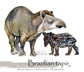 tapir hand drawn watercolor illustration