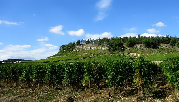 Panorama ensoleillé d'une vigne montant jusque sous une colline rocheuse boisée. Rangées de ceps au premier plan. Ciel bleu moutonneux en arrière-plan. Mercurey, côte chalonnaise, Bourgogne, France.