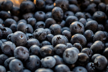 A close-up photo of a forest blueberries.