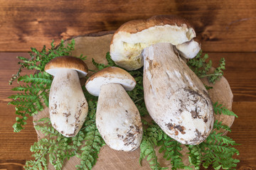 Porcini mushrooms on wooden background. Three Boletus edulis, excellent edible mushrooms