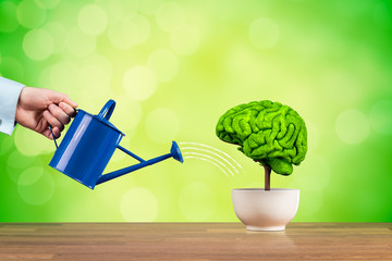 Creativity and brain function growth