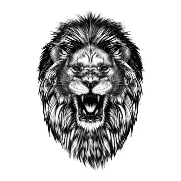 Hand drawn sketch of lion head in black isolated on white background.