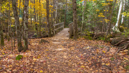 Michigan Fall Color Forest Landscape. Scenic hiking trail winds through Michigan forest blazing with vibrant fall foliage at the Canyon Falls Scenic Area in the Upper Peninsula.