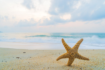 A starfish besides sea shore on a beach with white sand