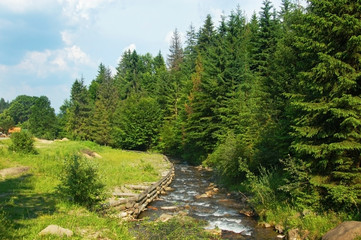 The mountainous small river flows from the mountains along the fir-tree forest in the mountains in the summer