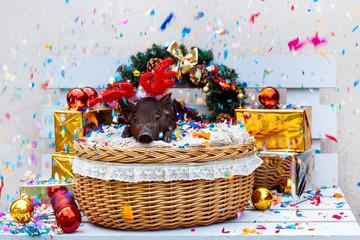 pig piglet little black basket wicker cute Vietnamese breed new year happy Christmas tree horns deer decorations garland gift marble