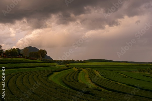 36cdc902d24ac ... field, sky, green, grass, nature, meadow, agriculture, blue, farm,  summer, rural, clouds, cloud, countryside, hill, tree, spring, road, sunset,