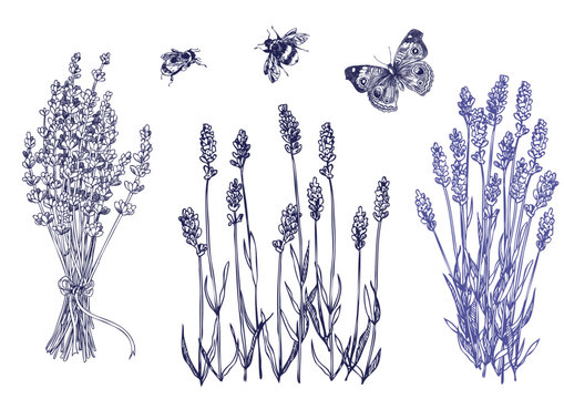 Lavender set with bees