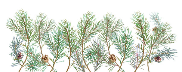 Horizontal border with pine branches and cones, needles on white background, hand digital draw, watercolor style, decorative botanical illustration for design, Christmas tree, panoramic view, vector
