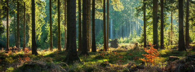 Tuinposter Bos Panoramic Sunny Forest in Autumn