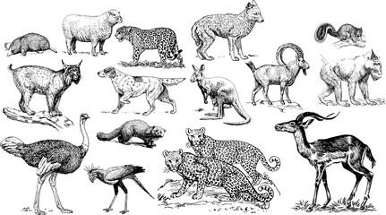 Fototapeta アフリカの動物のイラスト