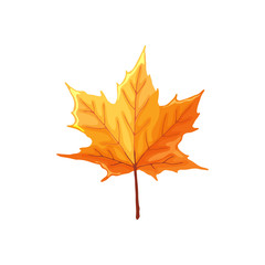 Hand drawn maple leaf. Colorful and bright maple leaf isolated on white background.