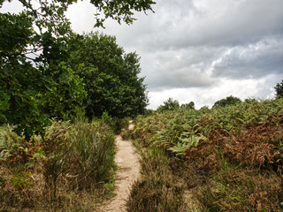 Rundgang Wahner Heide
