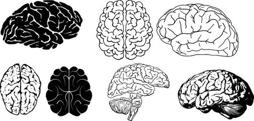 脳のイラストとシルエット
