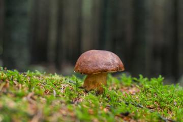 Grzyb w lesie