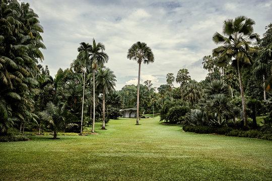 Singapore, Botanic Garden, palm tree