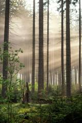 Morgens im Kaufunger Wald