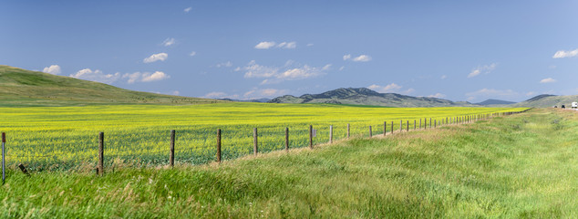 Door stickers Pistachio Flowers fill a field across the prarie on a beautiful summer day in Alberta, Canada