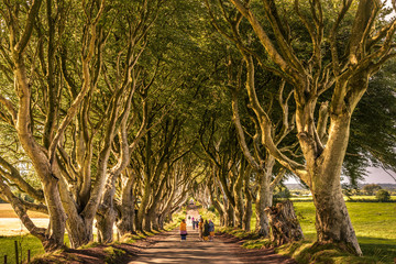 Scenic road through the  Dark Hedges avenue  in Armoy, Norther Ireland