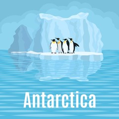 arctic penguins stand on a glacier near the mirror water