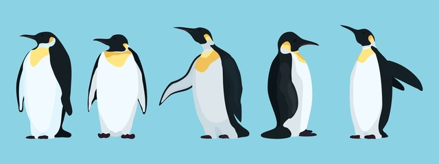 bright penguins characters in different poses