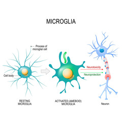 Activation of a microglial cell.