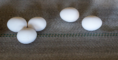 The production of chicken eggs, poultry, chicken eggs go through the conveyor for further sorting, close-up, transporter, farm