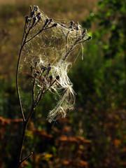 cobweb on dry grass