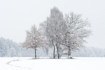 Baumgruppe im Schneesturm