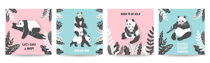 Cute Panda bear illustrations, Collection of Simple style Posters, Covers, Birthday greeting cards, Wall Print in vector
