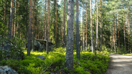 small road in the finnish forest