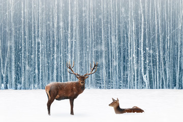 Wall Mural - Family of noble deer in a snowy winter forest. Christmas fantasy image in blue and white color. Snowing.