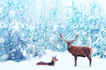 Wall Mural - Noble deer male and female in a snowy winter blue forest. Artistic christmas fantasy image in blue and white color.