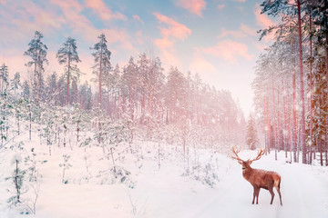 Fototapete - Lonely noble deer mail with big horns against winter fairy forest against sunset. Winter Christmas holiday image.