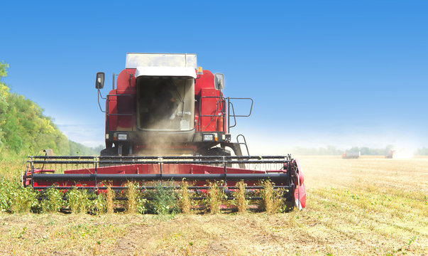 red combine harvester soybean harvest against the blue sky. The farm operates in the field in the autumn season