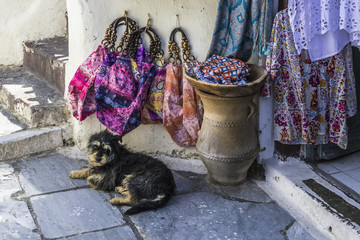 A dog on the threshold of a street shop