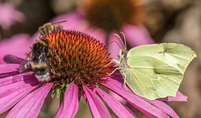 Insekten auf blüte