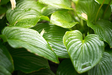 photo for background of green tropical leaves with water drops