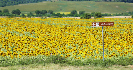 Via Francigena signpost and sunflower field, Tuscany