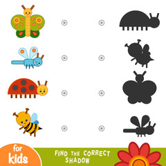 Find the correct shadow, education game. Collection of insects