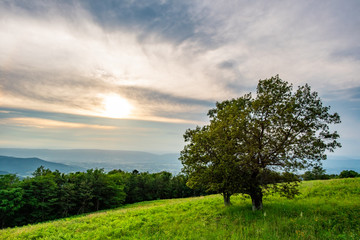 Sunset with Tree on a Hill
