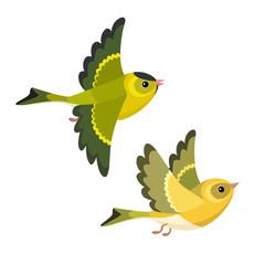 Flying European Siskin pair isolated on white background
