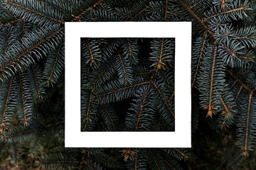 flat layout of dark moody pine tree pattern with a white square frame creative design concept f