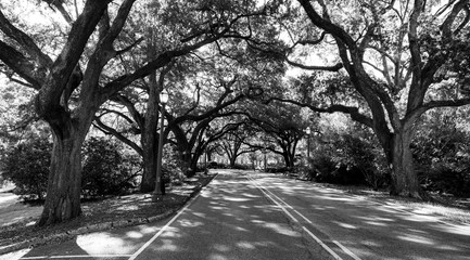 Well Established Trees Cover Roadway Branches Over Road
