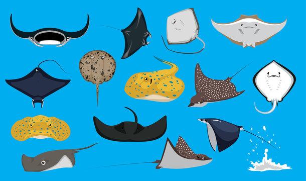 Various Cute Ray Stingray Cartoon Vector Characters