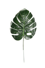 Tropical green leaf isolated on a white background.