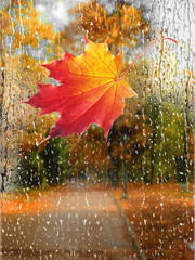 Autumn rain with fallen leaves