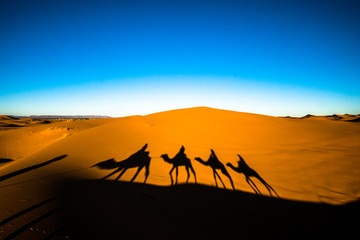 Foto op Canvas Kameel Wide angle shot of people riding camels in caravan over the sand dunes in Sahara desert with camel shadows on a sand